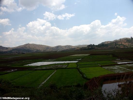 Rice fields of Malagasy highlands (RN7) [tana-rano_0143]