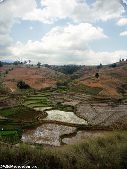 Rice fields of Malagasy highlands (RN7) [tana-rano_0150]