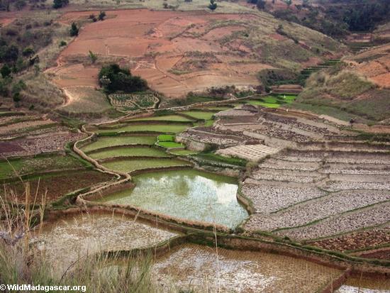 Rice fields of Malagasy highlands (RN7) [tana-rano_0154]