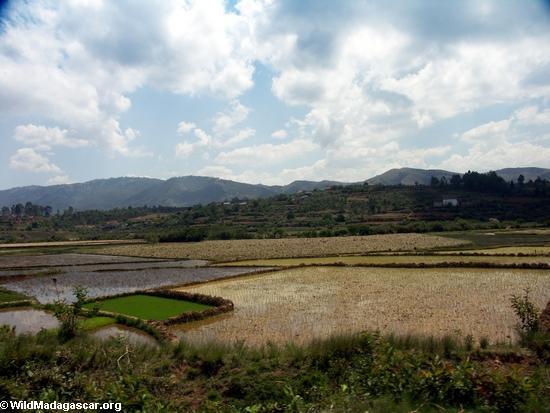 Rice fields of Malagasy highlands (RN7) [tana-rano_0176]