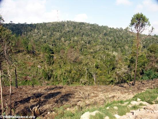 Abholzung in Madagaskar