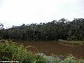 Andasibe forest (Andasibe)