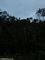 Andasibe montane forest (Andasibe)