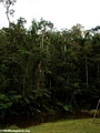 Analamazaotra Special Reserve forest (Andasibe)