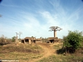 Baobabs with village (Morondava)