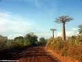 Baobabs (Morondava) [baobabs0078]