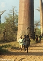 Baobabs with children (Morondava)