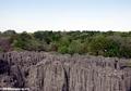 Petite tsingy (Tsingy de Bemaraha)