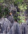 petite tsingy orange flowers (Tsingy de Bemaraha)