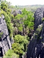 tsingy forest (Tsingy de Bemaraha)