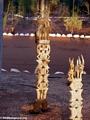 Antandroy totems at Berenty (Berenty)