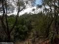 Berenty gallery forest (Berenty)
