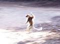 Dancing sifaka lemur (Berenty)