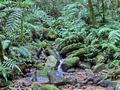 Ranomafana forest (Ranomafana )