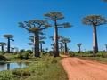 avenue de baobabs  (Morondava)