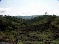 Slash-and-burn deforestation (Ifasina / Antoetra)