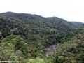 Ranomafana NP Rainforest (Ranomafana N.P.)