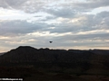 Pied crow flying above Isalo (Isalo)