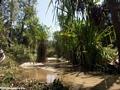 Isalo oasis (Isalo)