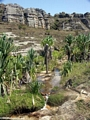 Isalo stream with palms and sandy substrate (Isalo)