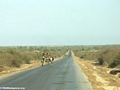 Zebu cart on road from Isalo (Isalo) [isalo-tulear0145]