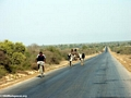 Zebu cart on road from Isalo (Isalo) [isalo-tulear0147]