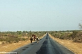 Zebu cart on road from Isalo (Isalo)