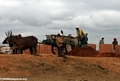 Zebu cart carrying bricks (Tana)