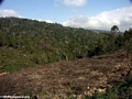 Deforestation in Madagascar (RN7) [tana-rano_0198]